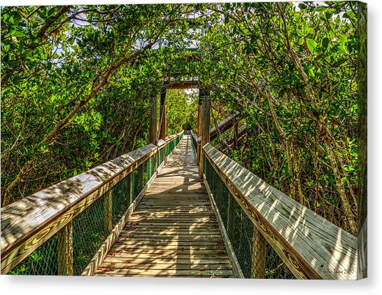 Tunnel Of Mangrove Green Canvas Print