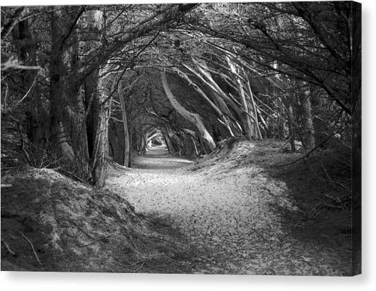 Tunnel To The Dunes In Black Canvas Print