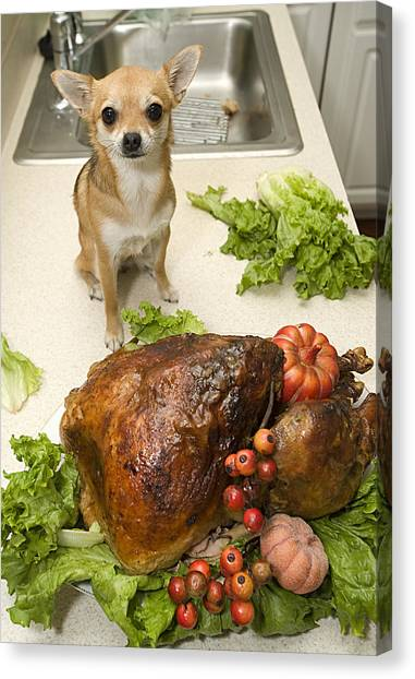 Turkey And Dog Canvas Print
