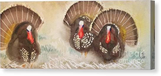 Turkeys Canvas Print