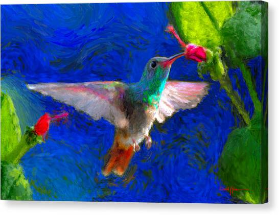 Da052 Turkscap Hummingbird  Canvas Print