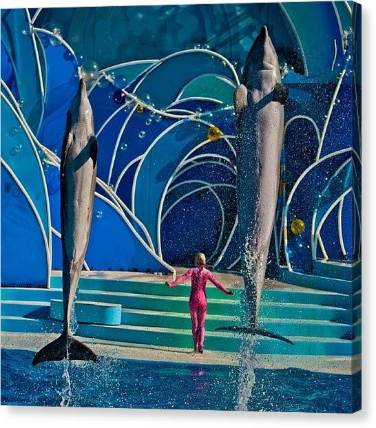 Dolphins Canvas Print - Turn Round Dreamworld Person! Your by Phil Day