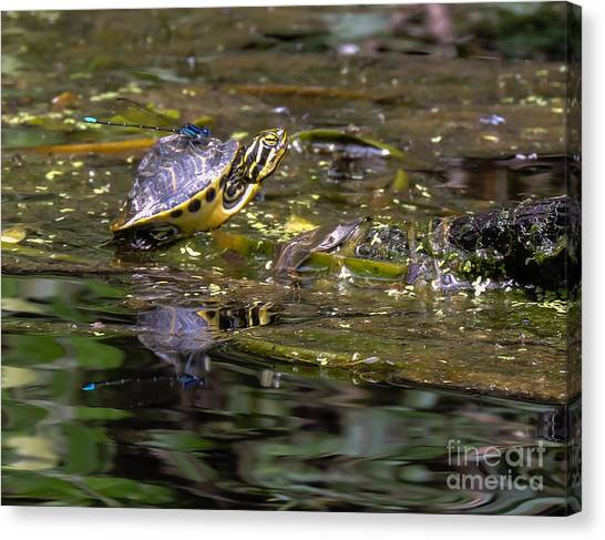 Turtle And His Friend Canvas Print