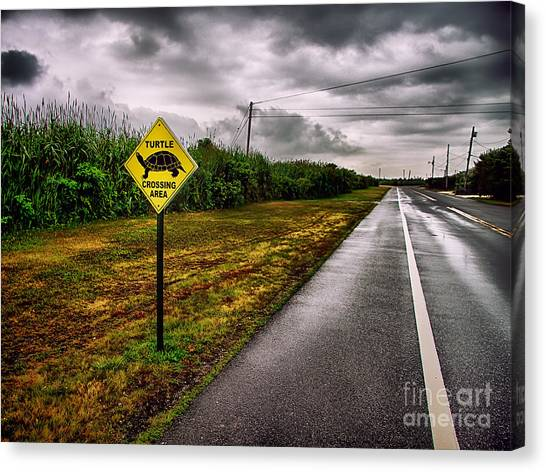Turtle Crossing Area Canvas Print