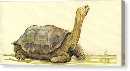 Tortoises Canvas Print - Turtle Galapagos by Juan  Bosco