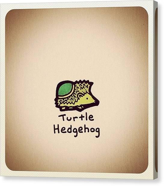 Turtles Canvas Print - Turtle Hedgehog by Turtle Wayne