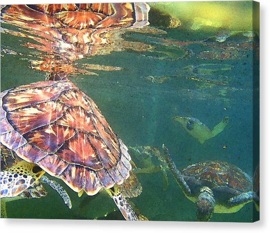 Coral Snakes Canvas Print - Turtle Reflections by Carey Chen