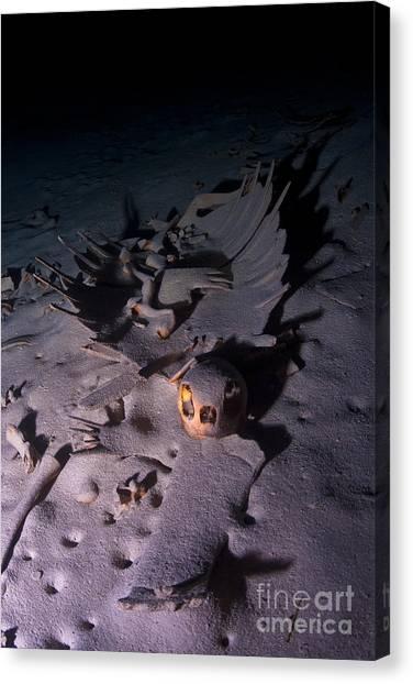 Turtle Skeleton Cave Canvas Print by Soren Egeberg