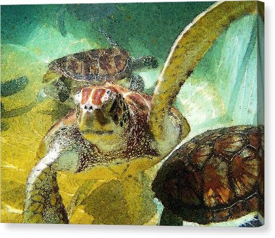 Venezuelan Canvas Print - Turtle Swim by Carey Chen