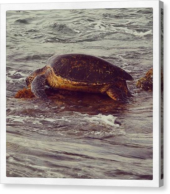 Sea Turtles Canvas Print - Turtles Are Cool by Mike Weiner