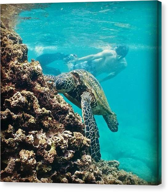 Reptiles Canvas Print - #turtles #turtle #honu #hawaiistagram by Brian Governale