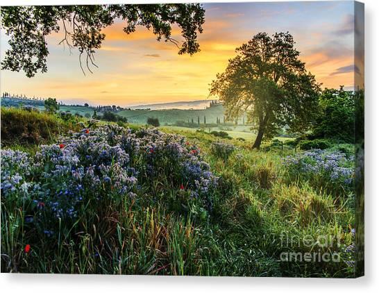 Tuscan Landscape Canvas Print