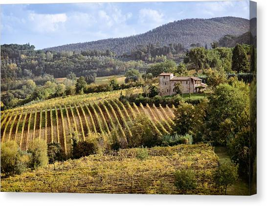 Vegetation Canvas Print - Tuscan Valley by Dave Bowman