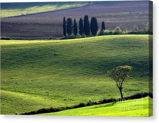 Tuscany Green Hills Canvas Print by Arie Arik Chen