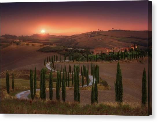 Cypress Canvas Print - Tuscany by Rostovskiy Anton