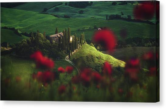 Rolling Hills Canvas Print - Tuscany - Spring Blossoms by Jean Claude Castor