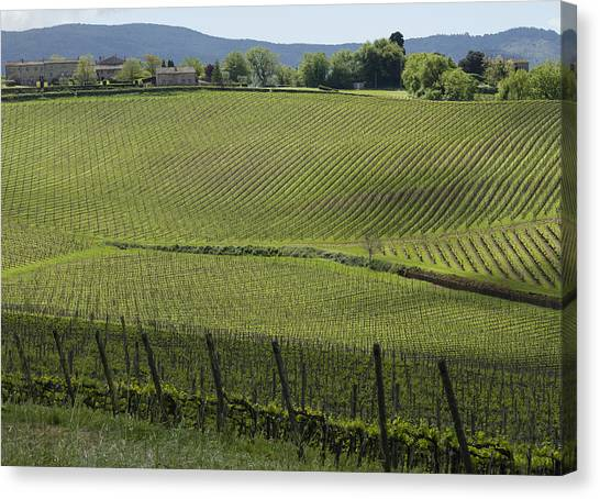 Tuscany Vineyard Series 2 Canvas Print