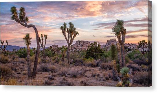 Twilight Comes To Joshua Tree Canvas Print