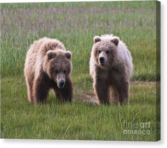 Baby Taylors Canvas Print - Twin Bear Cubs by Phyllis Taylor
