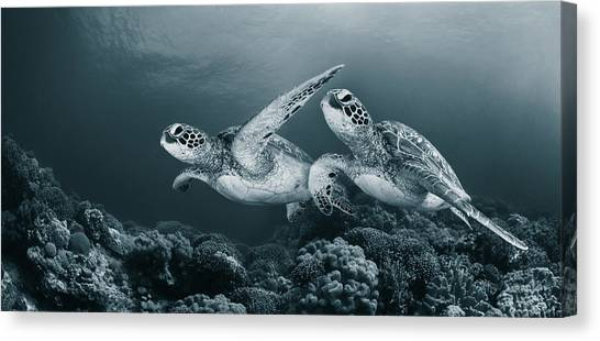 Coral Reefs Canvas Print - Twin Dance by Andrey Narchuk