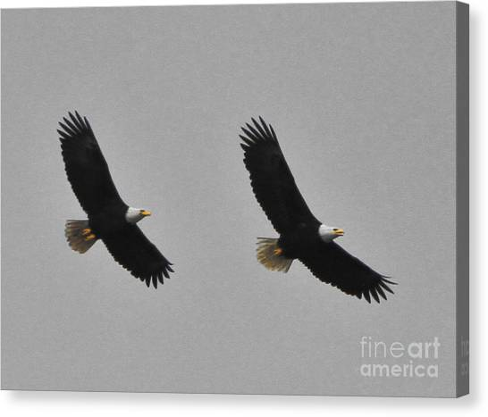 Twin Eagles In Flight Canvas Print