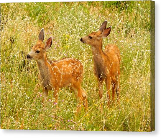 Twin Fawns Canvas Print