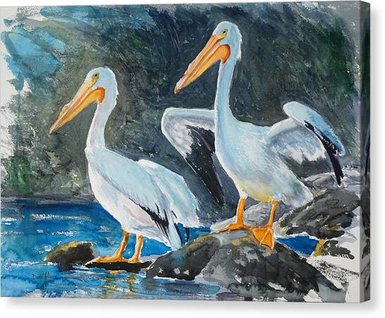 Da208 Twin Pelicans By Daniel Adams Canvas Print