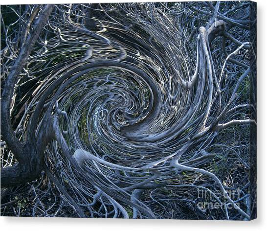 Twisted Briar Canvas Print by Drew Shourd