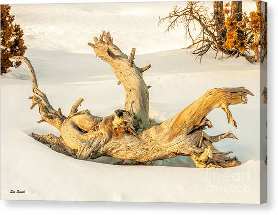 Twisted Dead Tree Canvas Print