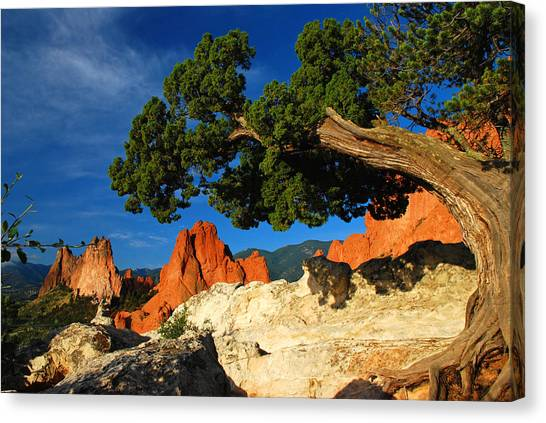 Twisted Juniper At The Garden Canvas Print