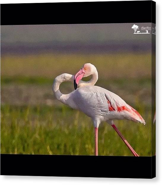 Flamingos Canvas Print - Twisted Love  I Will Find Mistakes In by Nayan Hazra