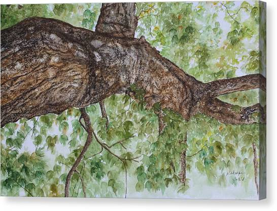 Realistic Rough Bark Canvas Print - Twisted Maple by Patsy Sharpe