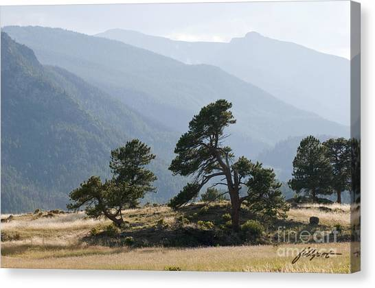 Twisted Pines Canvas Print