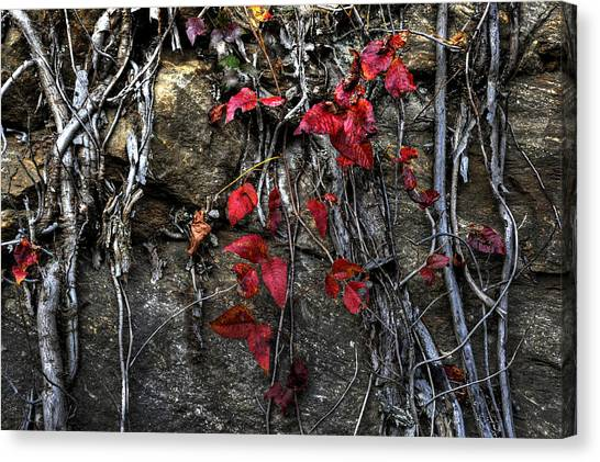 Twisted Red Canvas Print