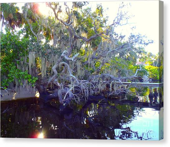 Mangrove Trees Canvas Print - Twisted Tree by Carey Chen