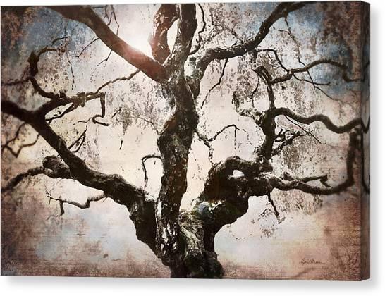 Twisted Tree I Canvas Print
