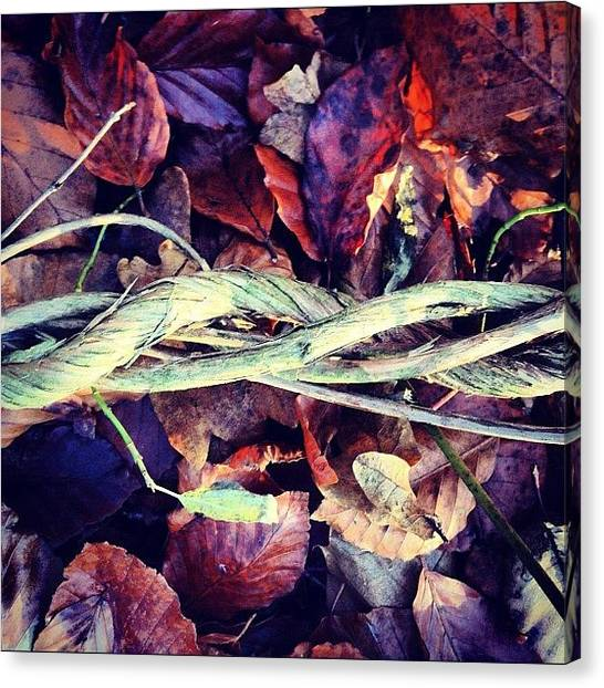 Autumn Leaves Canvas Print - Twisted Vines by Nic Squirrell