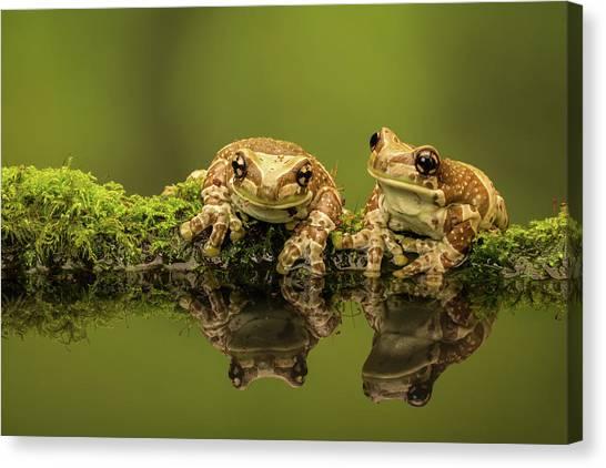 Two Amazon Milk Frogs Canvas Print by Markbridger