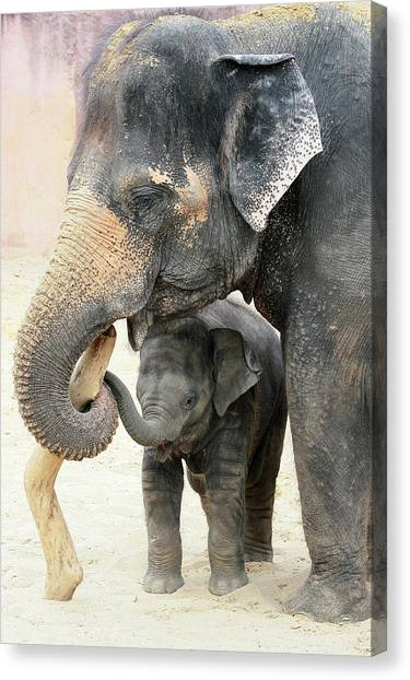 Zoo Canvas Print - Two by Antje Wenner-braun