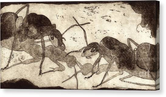 Two Ants In Communication - Etching Canvas Print