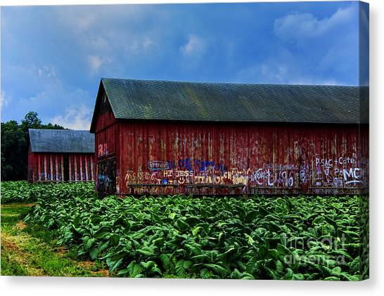 Two Barns Ready Canvas Print