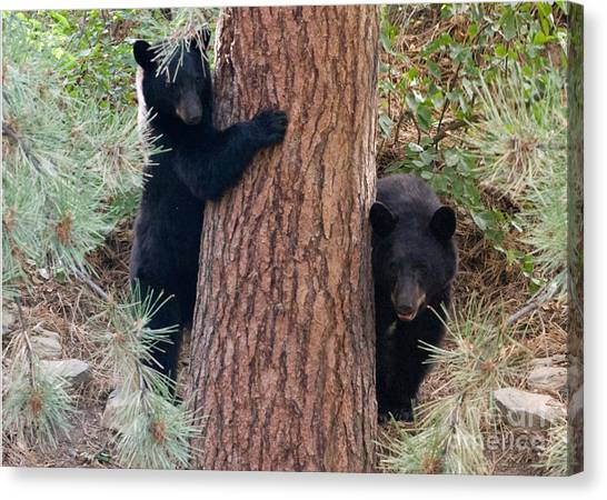 Two Bears Canvas Print