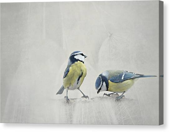 Search Canvas Print - Two Birds by Heike Hultsch