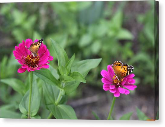 Two Busy Canvas Print