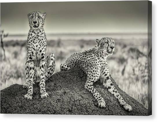 Camouflage Canvas Print - Two Cheetahs Watching Out by Henrike Scheid