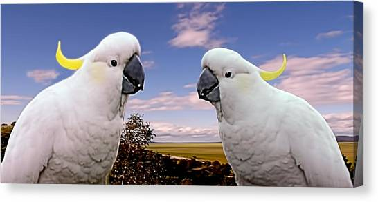 Two Cockatoos Canvas Print