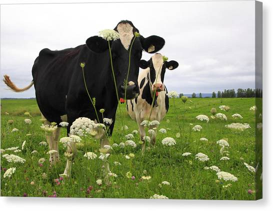 Two Cows In A Field Canvas Print
