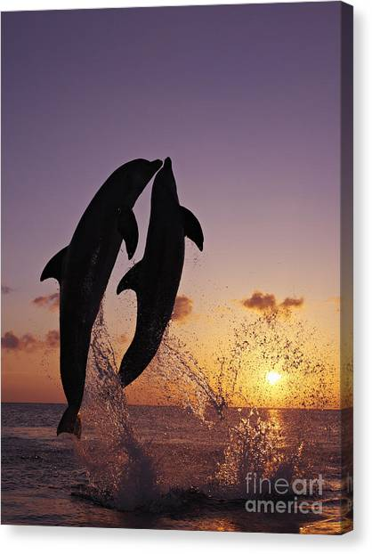 Bottlenose Dolphins Canvas Print - Two Dolphins Jumping Together At Sunset by Brandon Cole