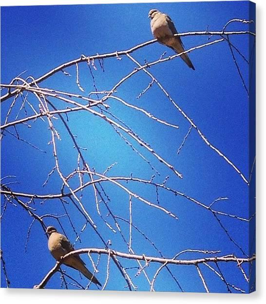 Dove Canvas Print - Two Doves #doves #tree #bird #birds by Lisa Thomas