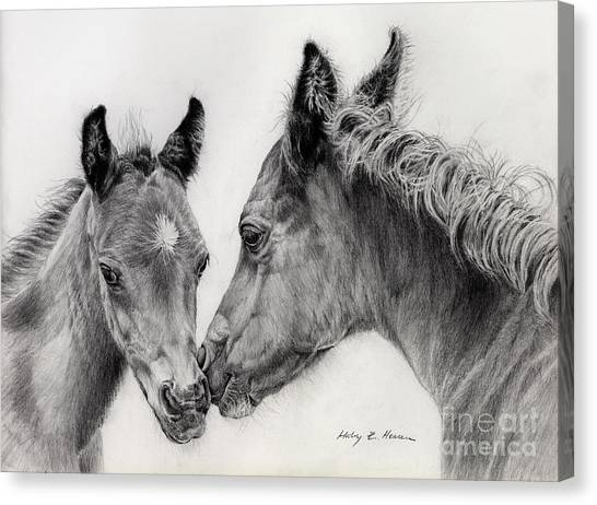 White Horse Canvas Print - Two Foals by Hailey E Herrera